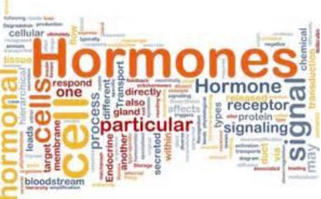 endocrinology